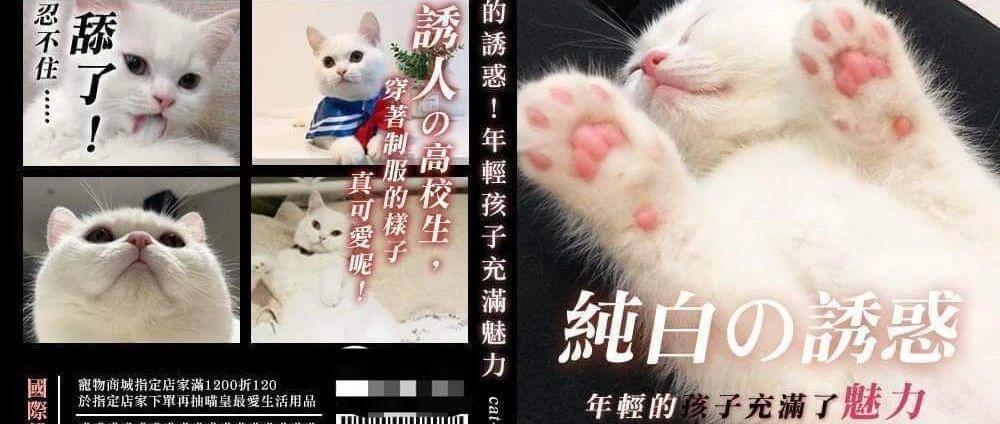 猫片,公告!!!